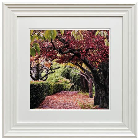 Blossom tree I framed print from Complete Colour