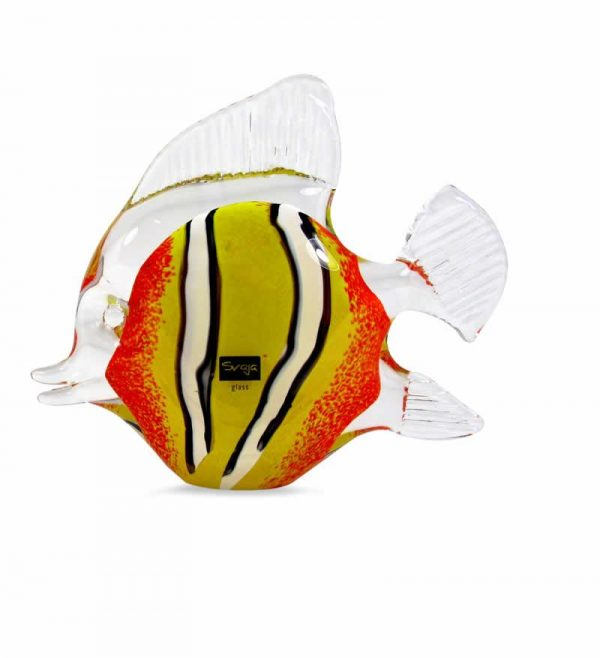 Clara Clown Fish Medium Orange
